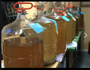 Creating new flavors in Mysto Mead mead works